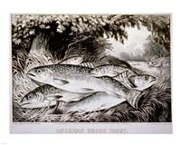 American Brook Trout Fine Art Print