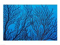 Sea Fan on a Reef, Belize Fine Art Print