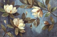 Floating Magnolias Fine Art Print