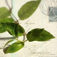 Vine Leaf Fine Art Print