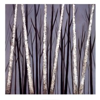 Birch Shadows Fine Art Print