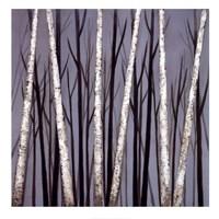 Birch Shadows Fine Art Print
