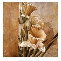 Champagne Daffodils II Fine Art Print