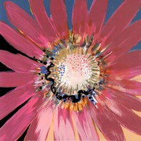 Sunshine Flower III Fine Art Print