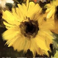 Sunflowers Square I Fine Art Print