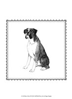 Best in Show XI Fine Art Print