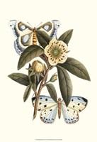 Butterfly Oasis I Fine Art Print