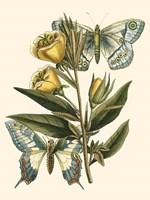 Butterfly Oasis II Fine Art Print