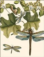 Dragonfly Medley II Fine Art Print