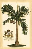 British Colonial Palm I Framed Print