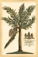 British Colonial Palm II Framed Print