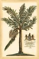 British Colonial Palm II Framed Print