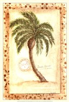 Licuala Grandis Palm Framed Print
