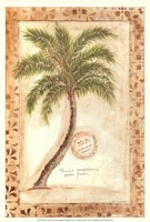 Phoenix Date Palm Fine Art Print