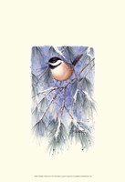 Chickadee in White Pine Framed Print