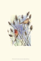 House Finches Fine Art Print