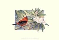 Scarlet Tanager Fine Art Print