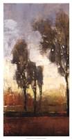 Tall Trees I Fine Art Print
