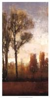 Tall Trees II Fine Art Print