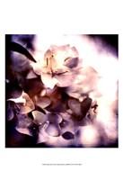 Purple Dusk I Fine Art Print
