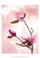 Tulip Blush I Fine Art Print