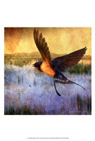 Barnswallow Framed Print