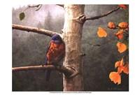 Bluebird Rain Fine Art Print