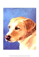 Dog Portrait-Yellow Lab Fine Art Print