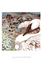 Swan Splash I Fine Art Print
