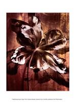 Bronze Parrot Tulip I Fine Art Print