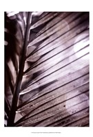 Silvery Frond II Framed Print