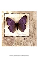 Butterfly Notes I Fine Art Print