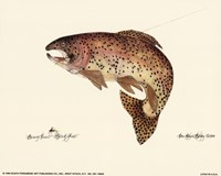 Brown Trout Fine Art Print