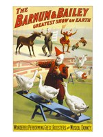 The Barnum & Bailey Performing Geese, Roosters and Musical Donkey Fine Art Print