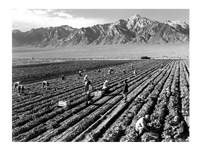Farm Workers and Mt. Williamson Fine Art Print
