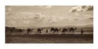 Egyptian Camel Transport Fine Art Print