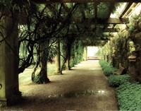 opulent garden I Fine Art Print