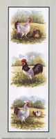 Roosters-2 Chickens Fine Art Print