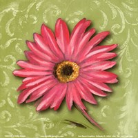Blooming Daisy I Fine Art Print
