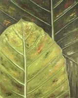 Green Zoom II Fine Art Print