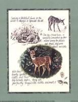 Deer Study Fine Art Print