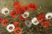 Poppy Symphony Fine Art Print