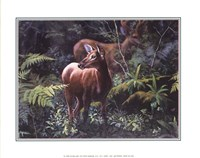 Deer in Fall Forest Fine Art Print
