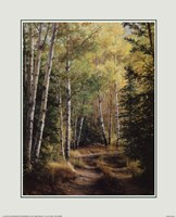 Woodland Path Fine Art Print