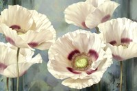 Tasmanian Poppies I Fine Art Print