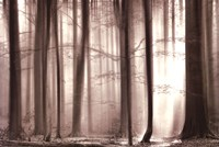 The Cloaking Woods Fine Art Print