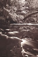 Whatcom Creek Fine Art Print