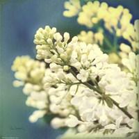Natures Lilac Blossom Fine Art Print