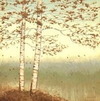 Golden Birch I with Blue Sky Fine Art Print