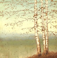Golden Birch II with Blue Sky Fine Art Print